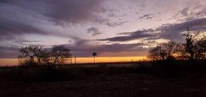 Dawn rising with bird house